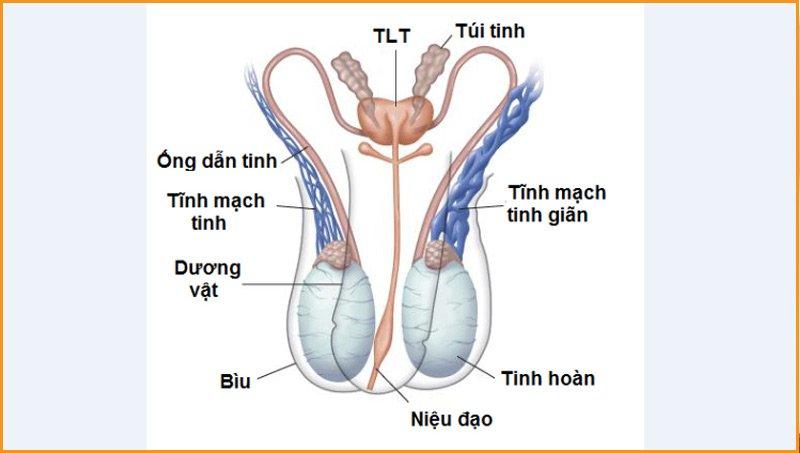 Bê tinh có thể gây nhiều tác hại cho hệ sinh dục ở nam