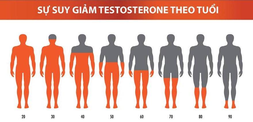 Testosterone là gì?