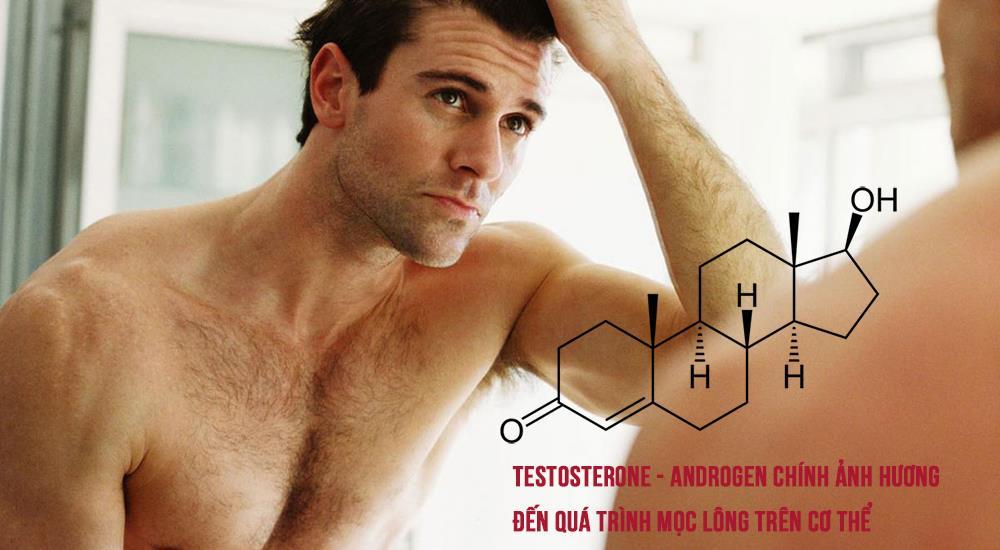 Testosterone - Adroden chính ảnh hưởng đến việc mọc lông