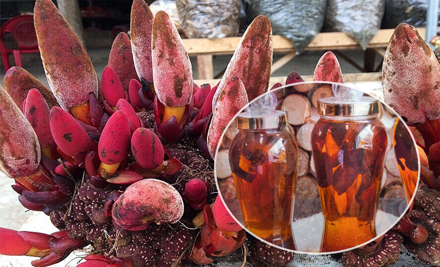 Rượu nấm ngọc cẩu