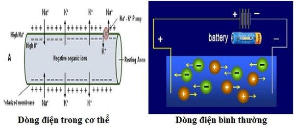Dòng điện sinh học và điện thông thường