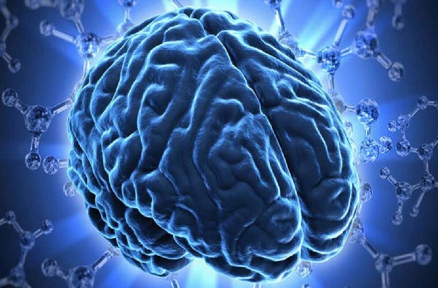 Não bộ là trung tâm thần kinh của con người là nơi quyết định sự sống còn của chúng ta