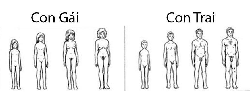 Quá trình tăng kích thước ngực của bé gái và bé trai